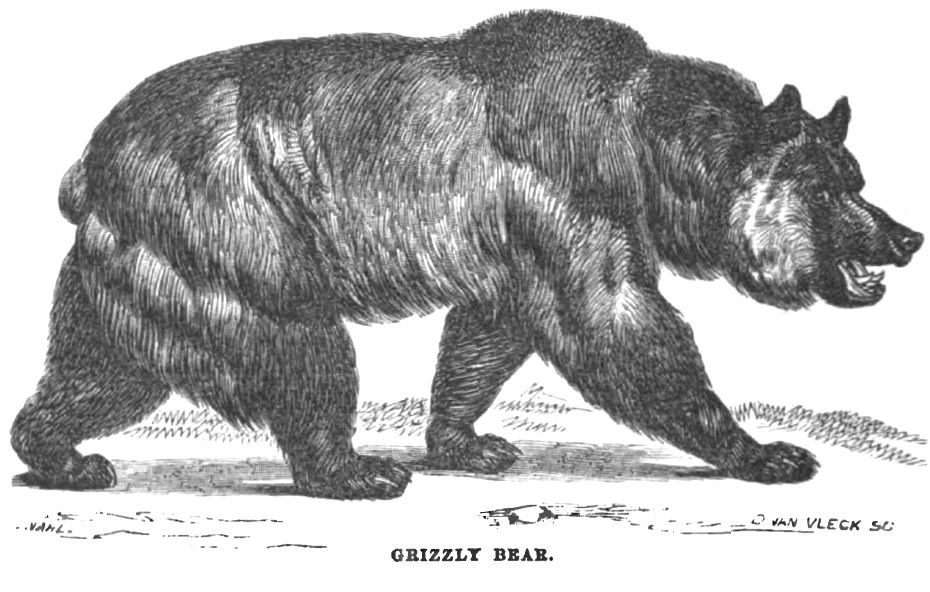 Grizzly Bear September 1856 Hutchings' Illustrated California Magazine