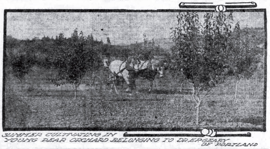 Geary Orchard, September 11, 1910 Oregonian