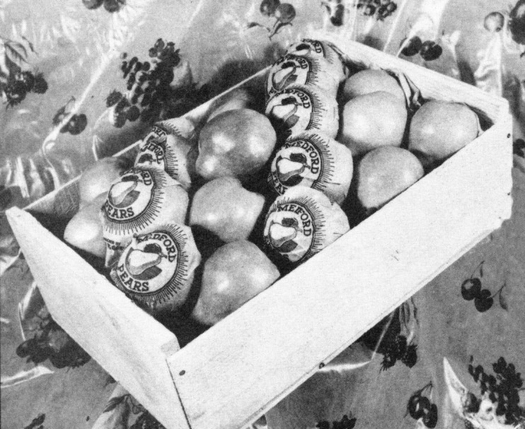 Box of Medford Pears